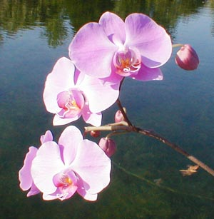 orchid-on-dock