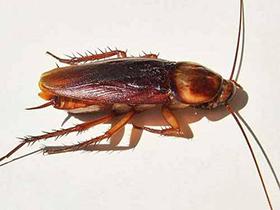 Έχετε κατσαρίδες; Φυσικός τρόπος για να τις διώξετε