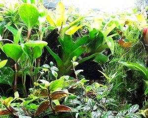 Ποτίστε τα φυτά σας με σόδα για να μεγαλώσουν γρήγορα!