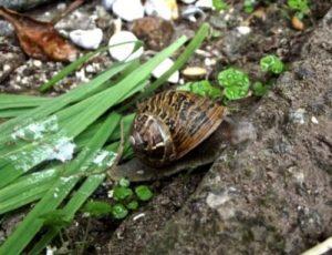 Διώχνω, χωρίς χημικά, τα έντομα από τον κήπο μου