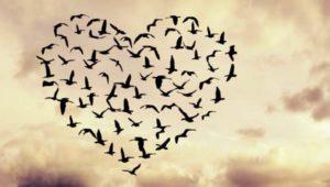 Ο κόμπος της αγάπης