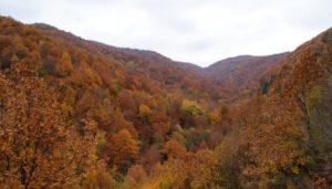 Αγιο Ορος: Φύση και φυσικό περιβάλλον