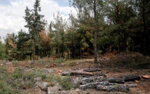 Αγιασμός για να σταματήσει η καταστροφή του Σέιχ Σου στη Θεσσαλονίκη
