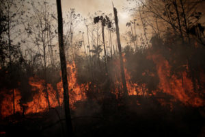 Η Επιληψία της εποχής μας – Η αδιαφορία μας για τις φωτιές στον Αμαζόνιο
